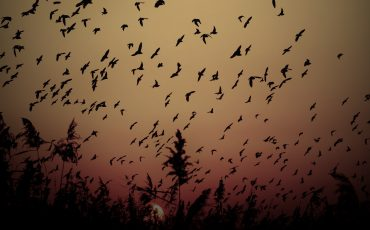 Colorful sky and bird flock. Sunset nature background.