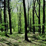 Laubwald Sonne